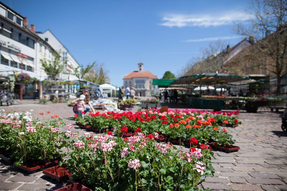 Blumenverkauf auf dem Marktplatz