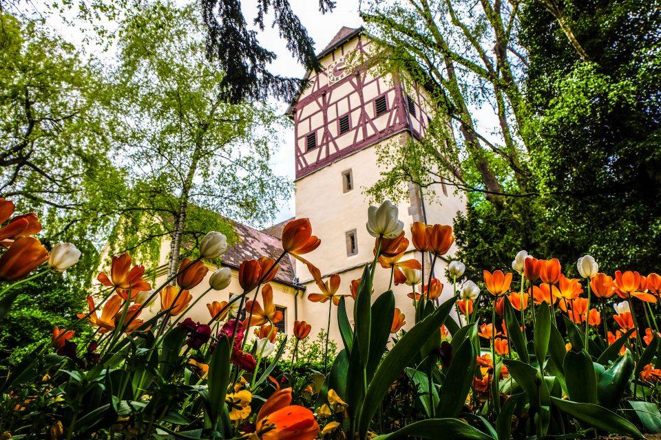 Altstadtbild mit Tulpen